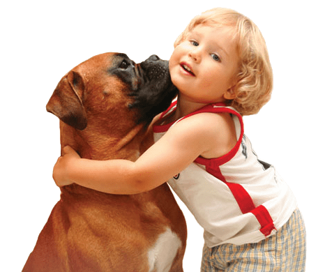 Veterinary assistant online degree