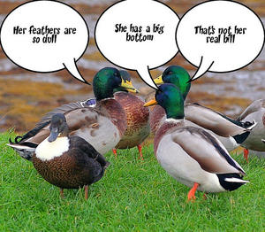 Gossiping Ducks.