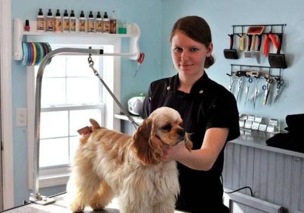 MANS BEST FRIEND ... Emily Johnson (owner of salon) brushes, Tatum (her cocker spaniel) on her grooming table