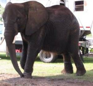 nosey-recent-chained