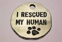Rescued My Human