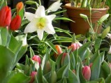 Florist Quality Easter Flowers at Outlet Prices