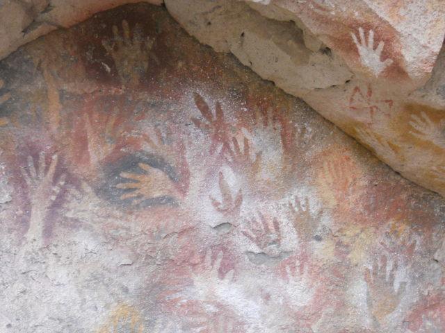 Rhea paws among human hands. Photo Credit