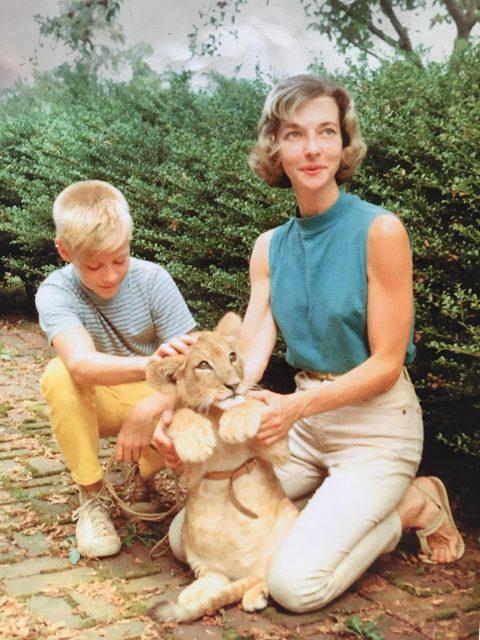 ماں ، بیٹا اور شیر شیر۔