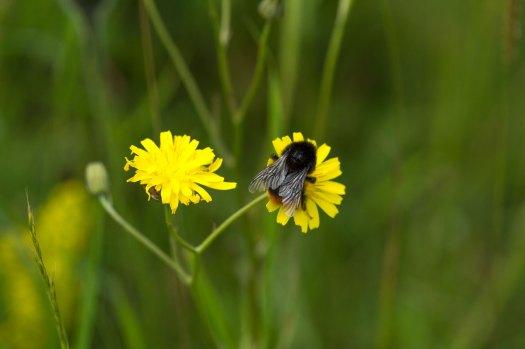 Bee. Photo: Matt Sweeting