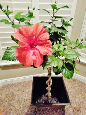 How to grow a tropical plant inside.