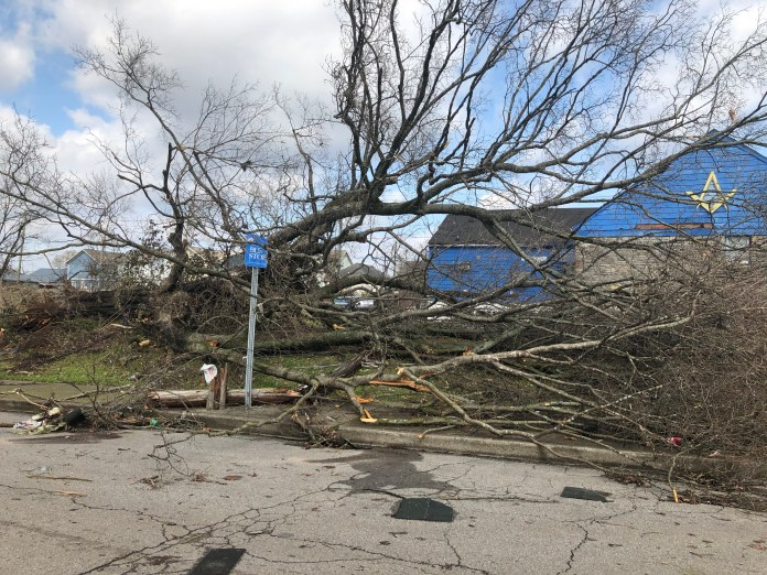Trees lined the streets of North Nashville neighborhoods. (Photo by: Jason Luntz)
