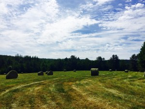 Hay in June