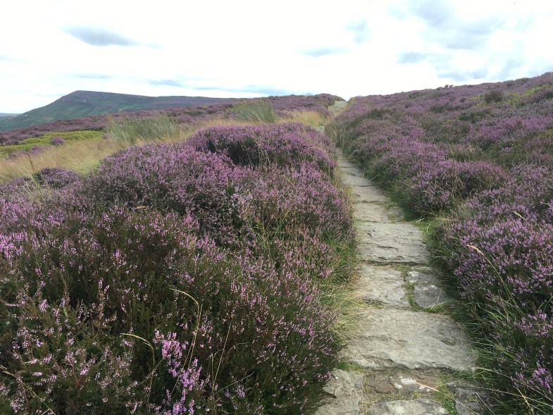 The path surrounded by Heather