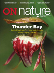Thunder Bay in ON Nature