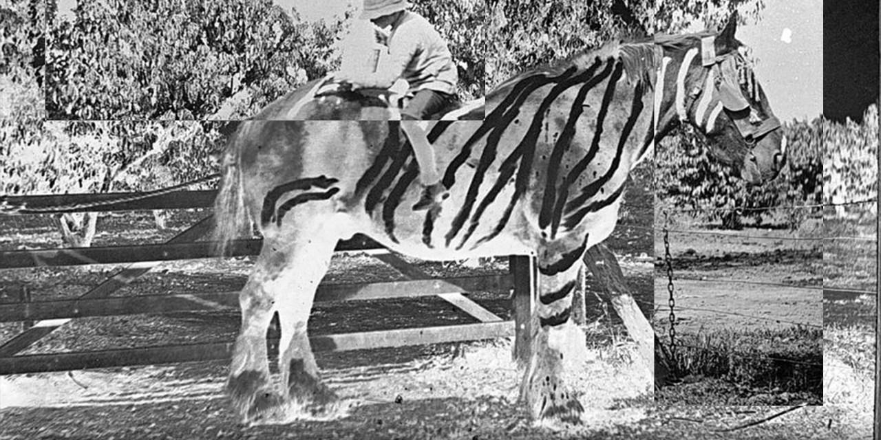 The Black Stripes on a White Horse