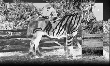 The Black Stripes on a White Horse