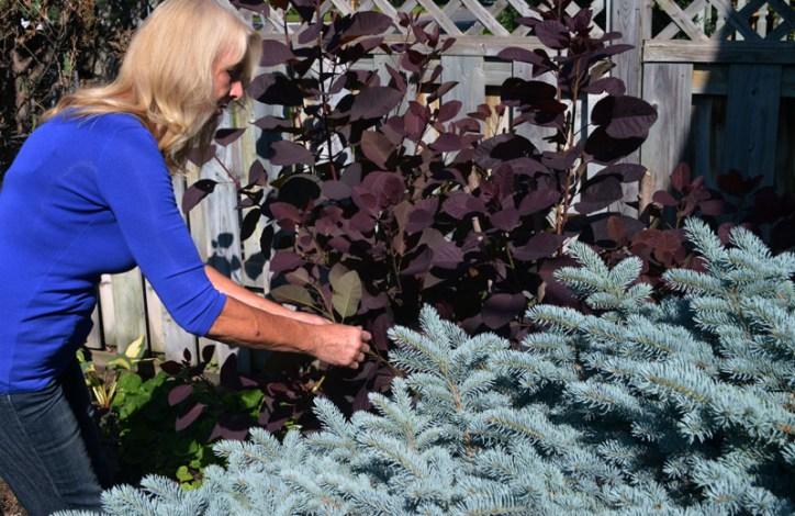 Bev Werbowy in her Van Norman Street garden.