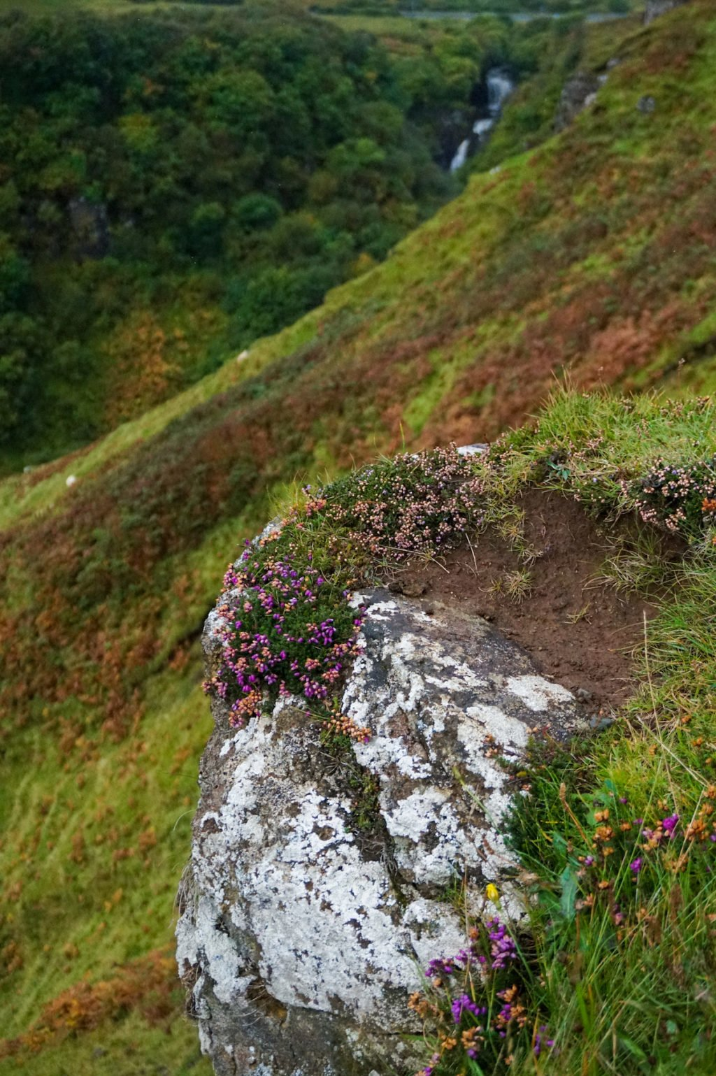 Flowers •3-Day Tour to Skye, The Highlands, and Loch Ness | The Wanderful Me