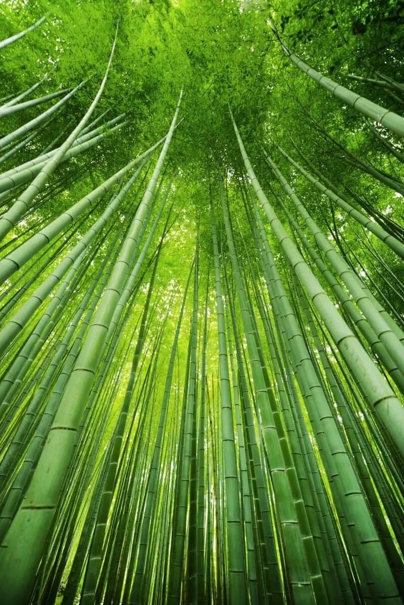 Arashiyama, Japan by The Wandering Lens www.thewanderinglens.com