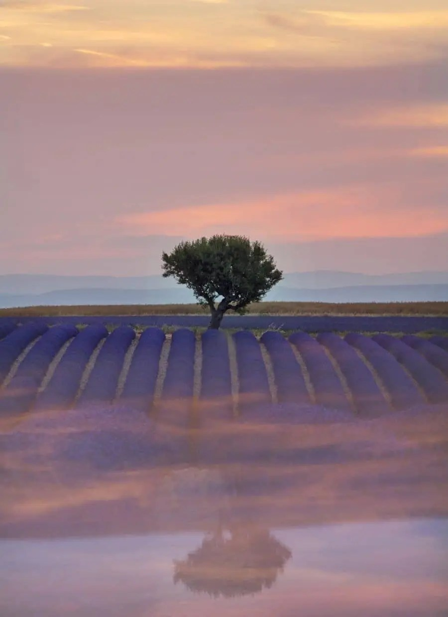 Provence Lavender Fields - Creative Landscape Photography by Lisa Michele Burns of The Wandering Lens