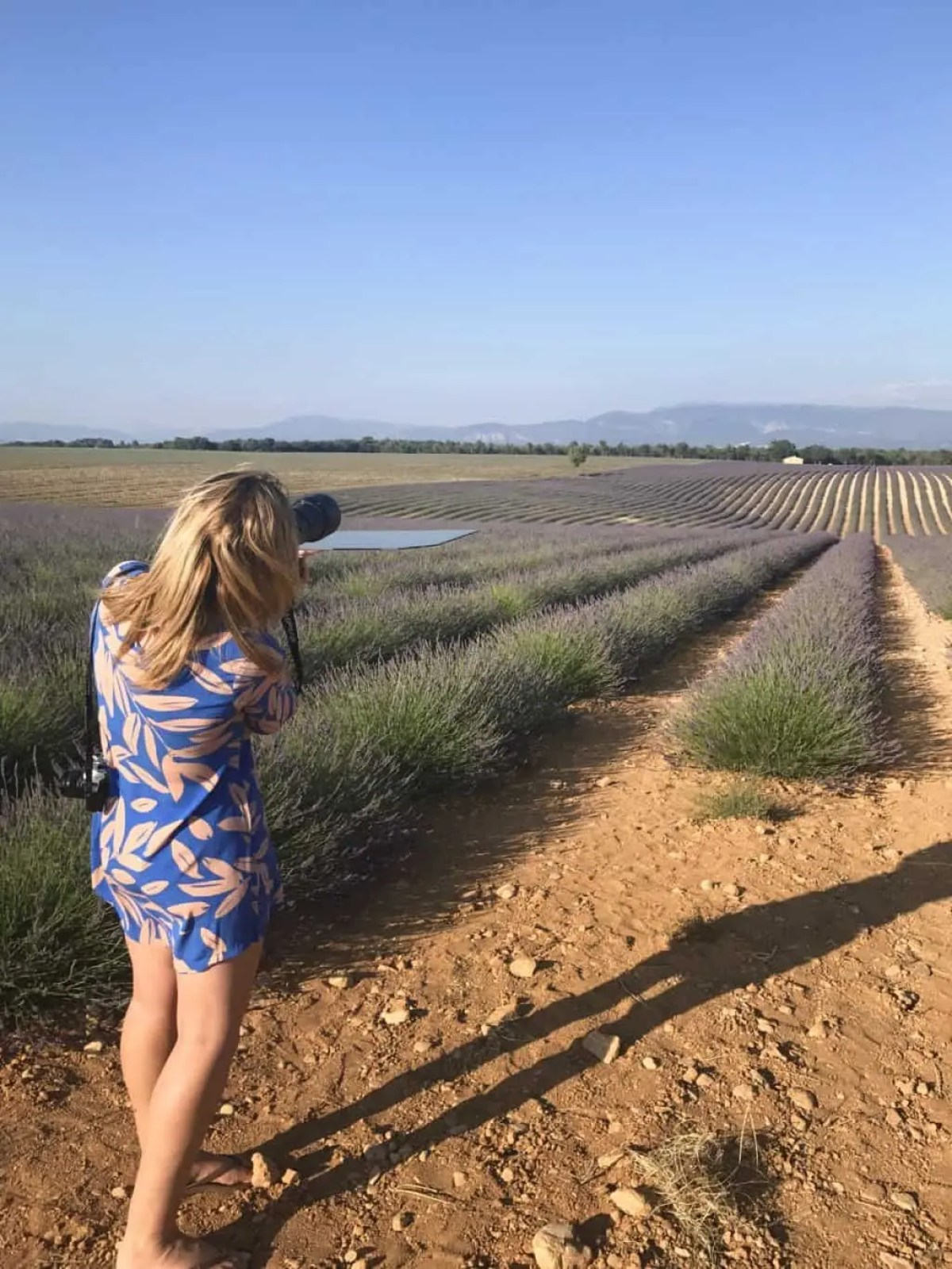 Photographing the lavender fields of Provence