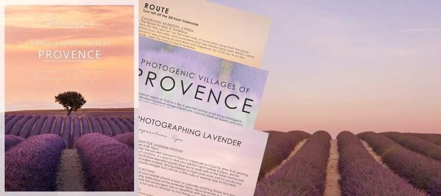 Provence lavender field guide