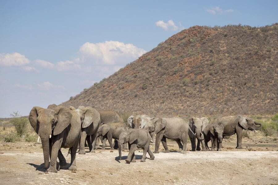 Tau Game Lodge Madikwe Game Reserve, South Africa