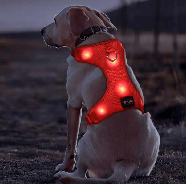 LED harness for dogs