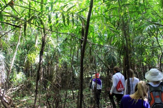 Amazon River, Amazon Jungle, Amazon River Cruise, Aqua Expeditions