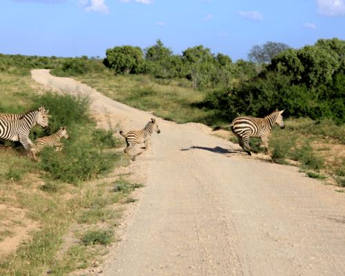 Safari in Tsavo East, Kenya