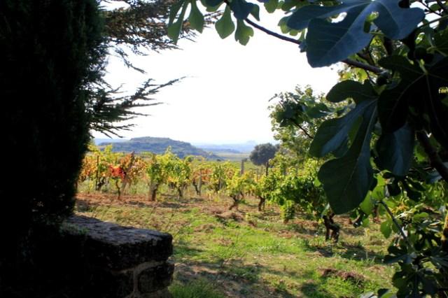 Bodega Remelluri, La Rioja