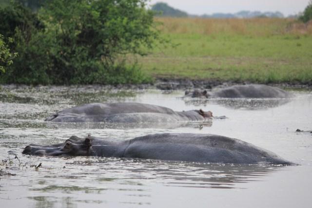 Safari in Queen Elizabeth National Park, Uganda