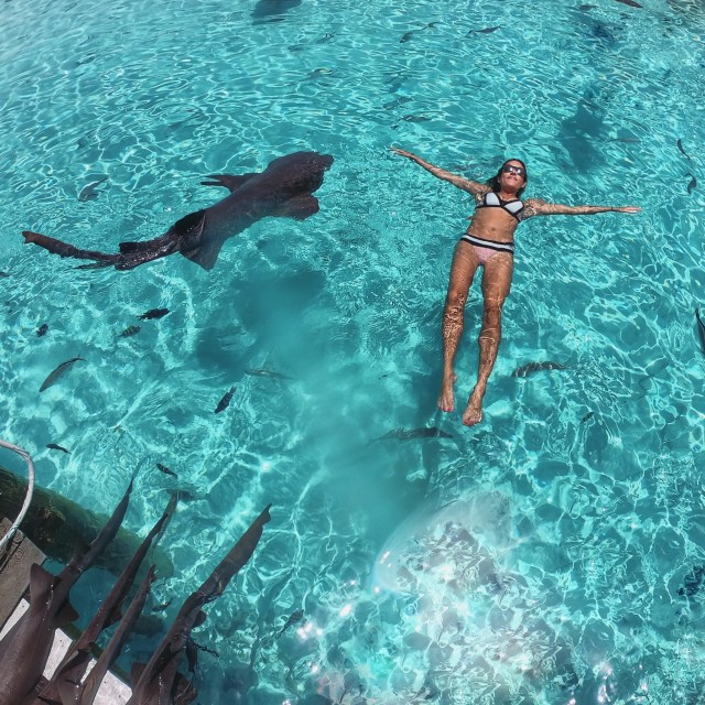 Swimming with Sharks, Compass Cay