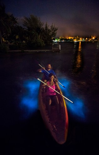 bioluminescence tour grand cayman
