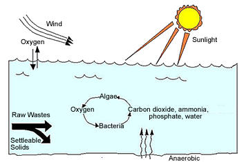 diagram of parts of the foot secondary facultative ponds | water treatment | waste ... diagram of oxidation pond