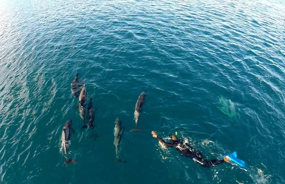 Swim with dolphins at Mauritius. www.theweddingnotebook.com