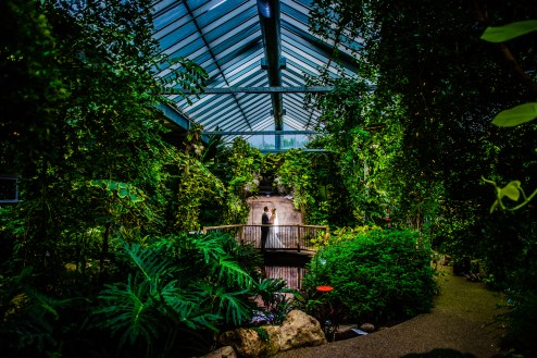 Cambridge Butterfly Conservatory | Photo: Dudek Photography