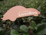 Love Bug Logo