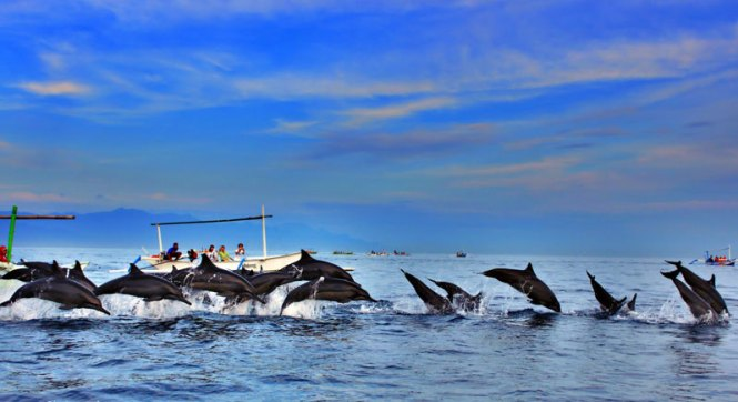 Things to Do in Bali Lovina Beach Dolphin Watching