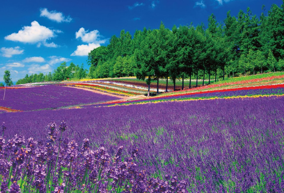 hokkaido-honeymoon-lavender-fields-be-en