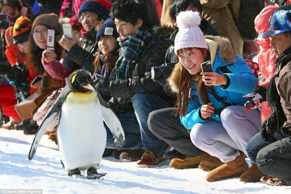 Hokkaido Honeymoon - Asahiyama zoo - Daily Mail