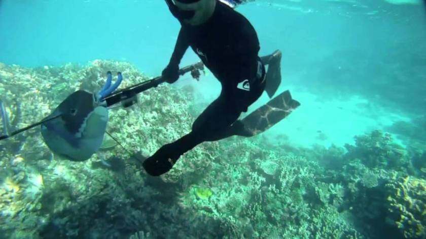 New Caledonia Honeymoon - Spearfishing - YouTube
