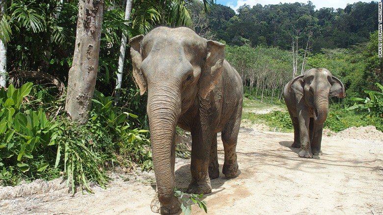 Phuket Honeymoon