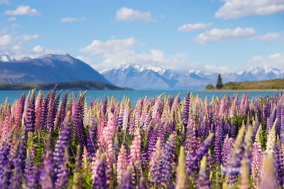 best honeymoon destination New Zealand