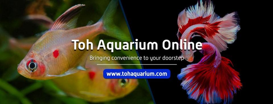 Toh Aquarium aquarium shops