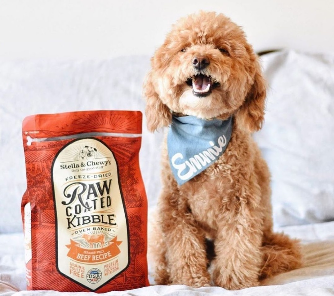 10 Best Dog Foods in Singapore