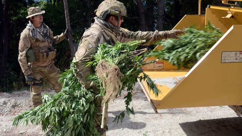 california seizes 30 million in black market cannabis from illegal pot shops  681905 The Weed Blog | Reviews | Store | Culture | Worldwide
