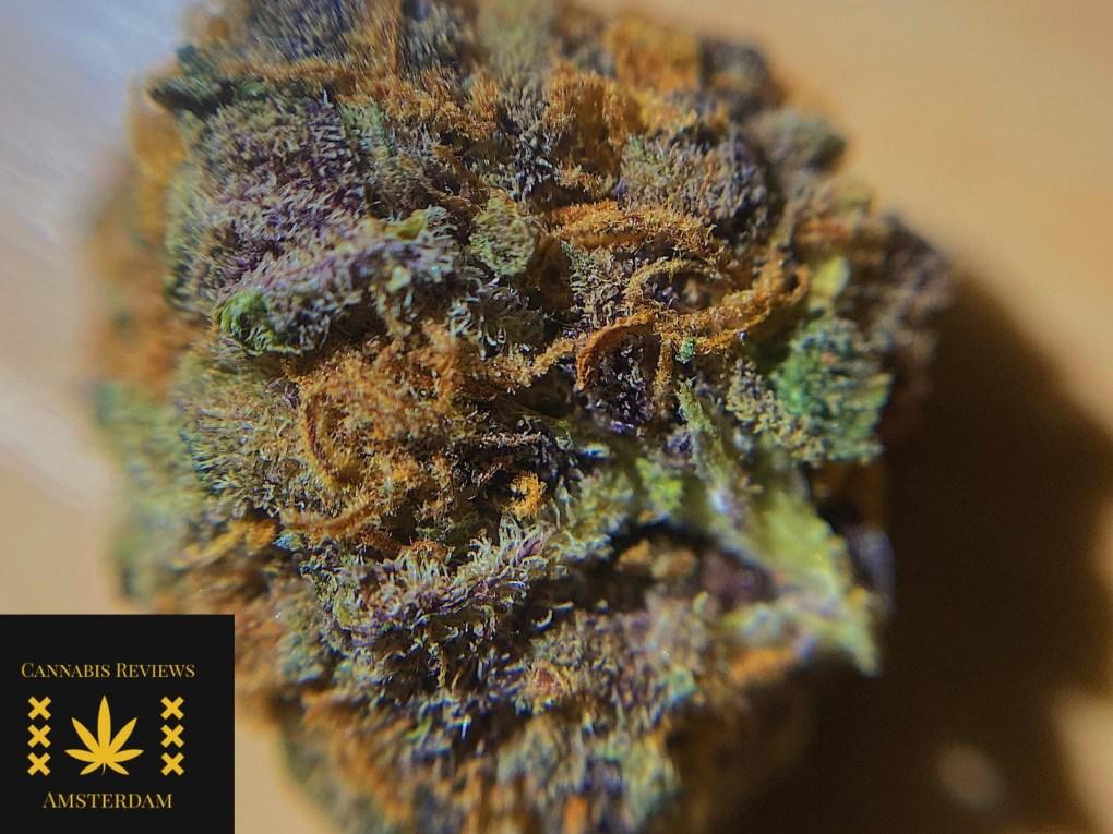 f8d8914d b2ef 497e b41b a046f348d376 The Weed Blog - Cannabis News, Culture, Reviews & More