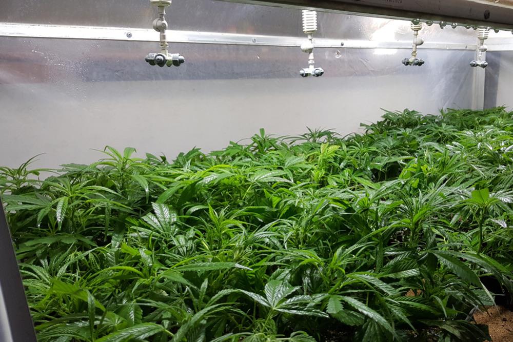 Thc-global-cannabis