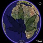 earth marijuana