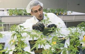 The dealer wants in on Quebec's marijuana plan