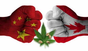 China Blames Canada For Its Cannabis Problem But Produces 50 Percent Of The World's Supply