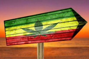 The Green Organic Dutchman Opens Its First Dispensary In Jamaica