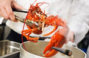 'Humane' restaurant getting lobsters stoned before steaming them alive